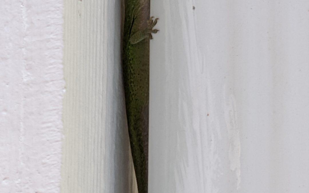 An Acorn, a Web, and a Lizard